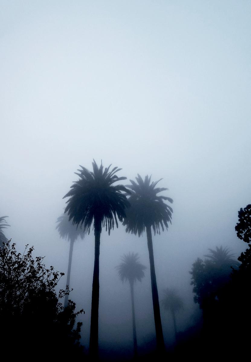 Foggy PalmsLess color.jpg