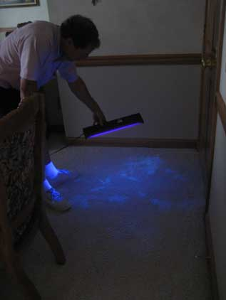 Pet-Urine-Black-Light-Inspection