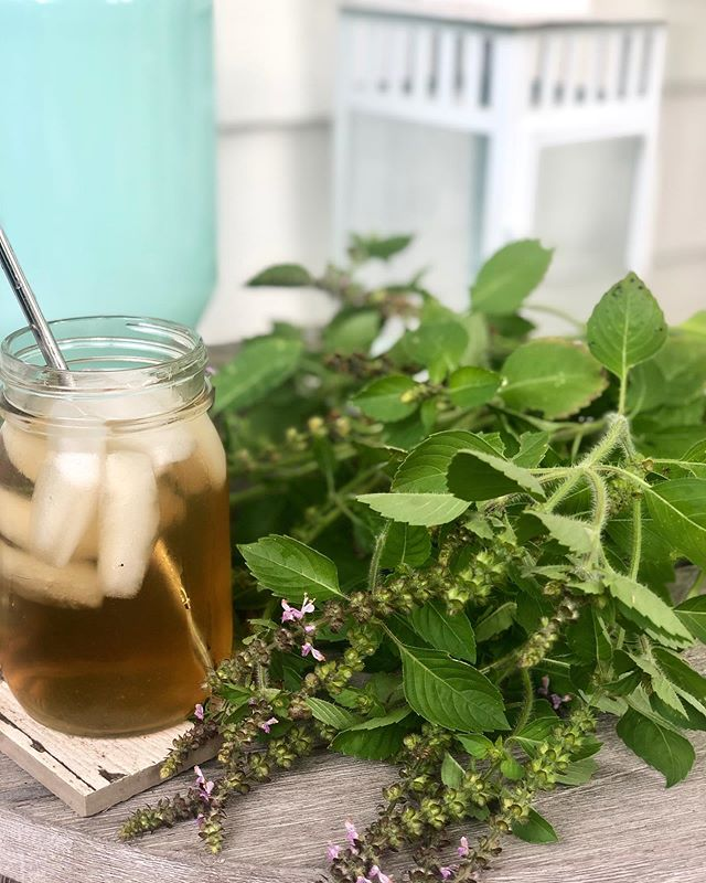 """Enjoying some fresh Tulsi iced tea on this last glorious summer day. Adaptogenic and nootropic Tulsi / Holy Basil is known as """"the yoga of herbs"""", because it calms your nerves and awakens your mind. Clinical studies are also showing that it boosts immunity. Check out my stories for more in the lastest @goop herbal tutorial.  #herbs #medicinalherbs #organicherbs #takeyourherbs"""