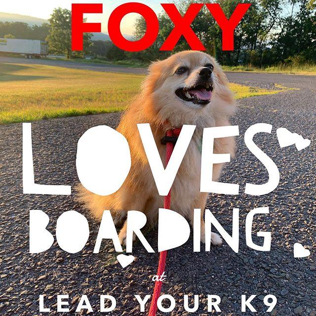 Foxy girl enjoying her boarding visit!