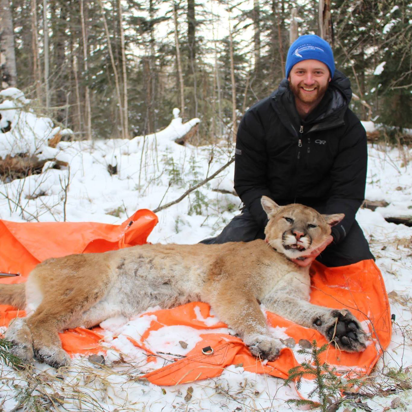 13 LUKE MOUNTAIN LION RESEARCH 1.jpg