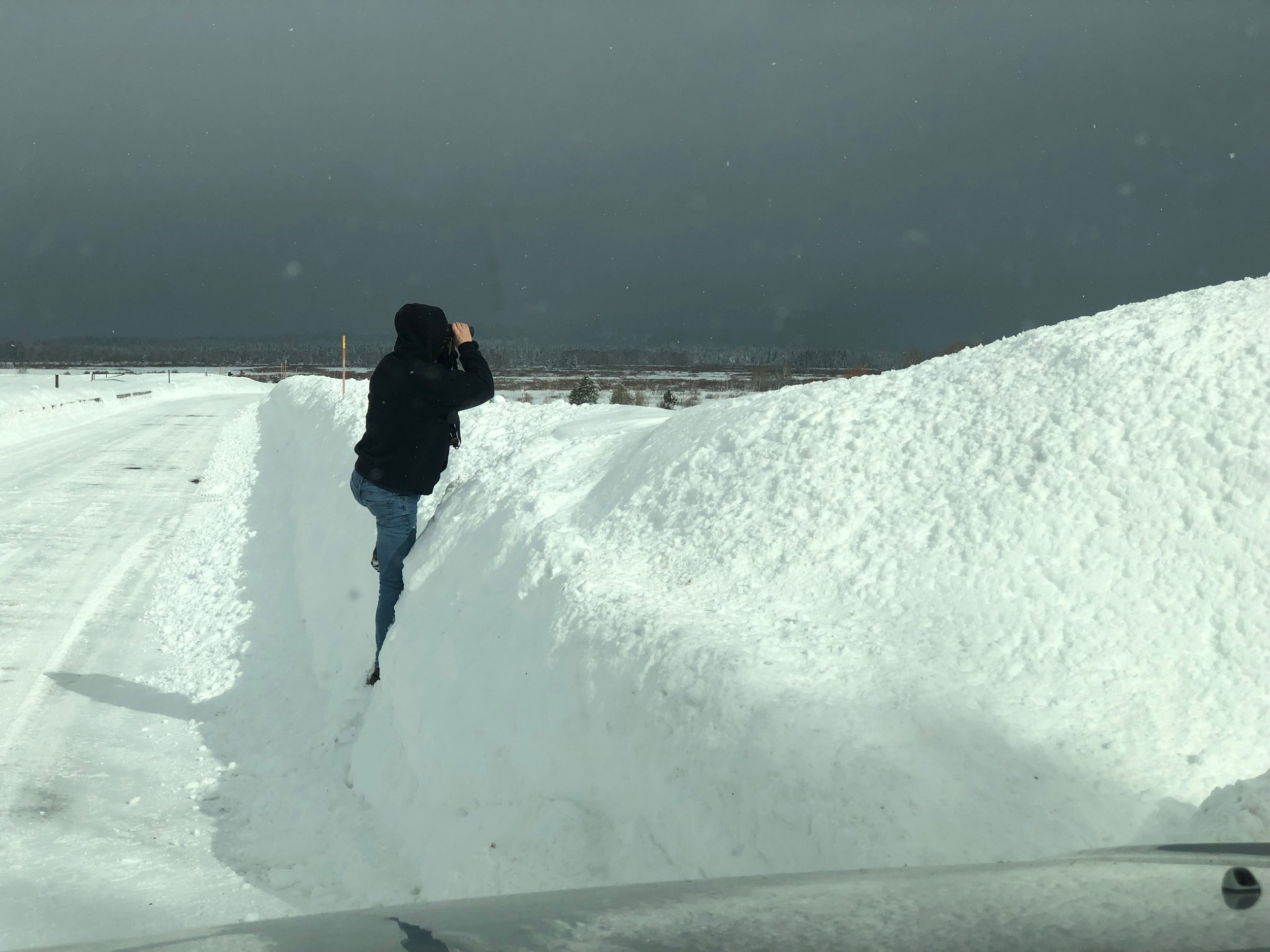 "Ron's wing man, ""Heath"" scouting over snow bank."