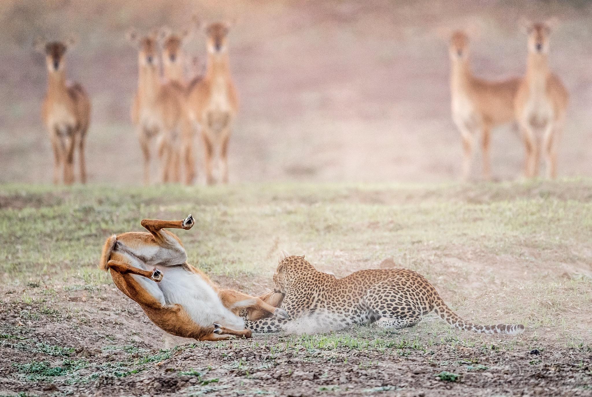 FAREWELL COMRADE - Zambia 2019.jpg