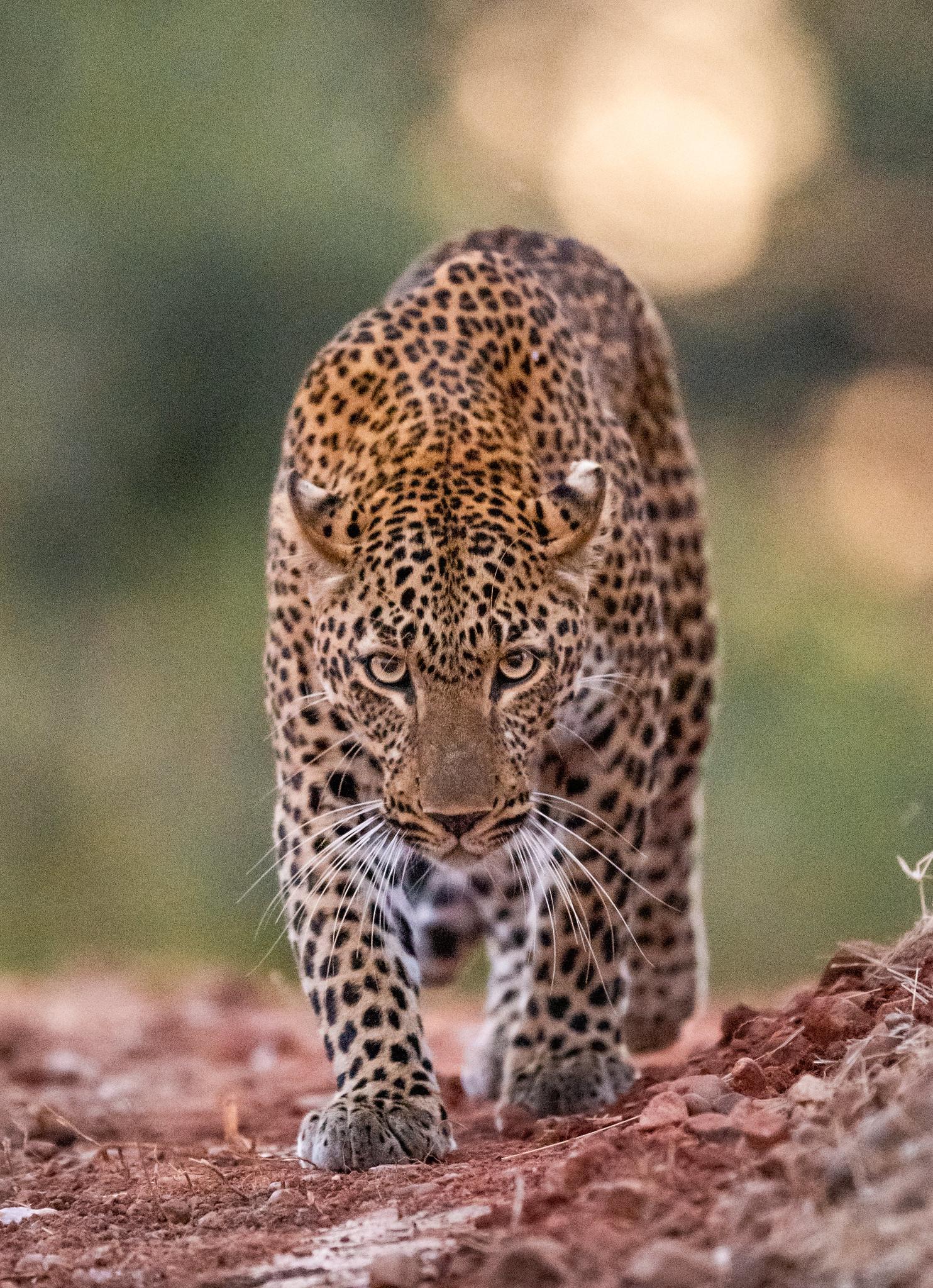 DUSK HUNTER - ZAMBIA 2019.jpg