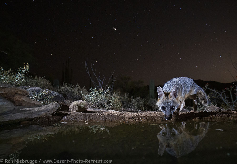 Fox-night-stars.jpg