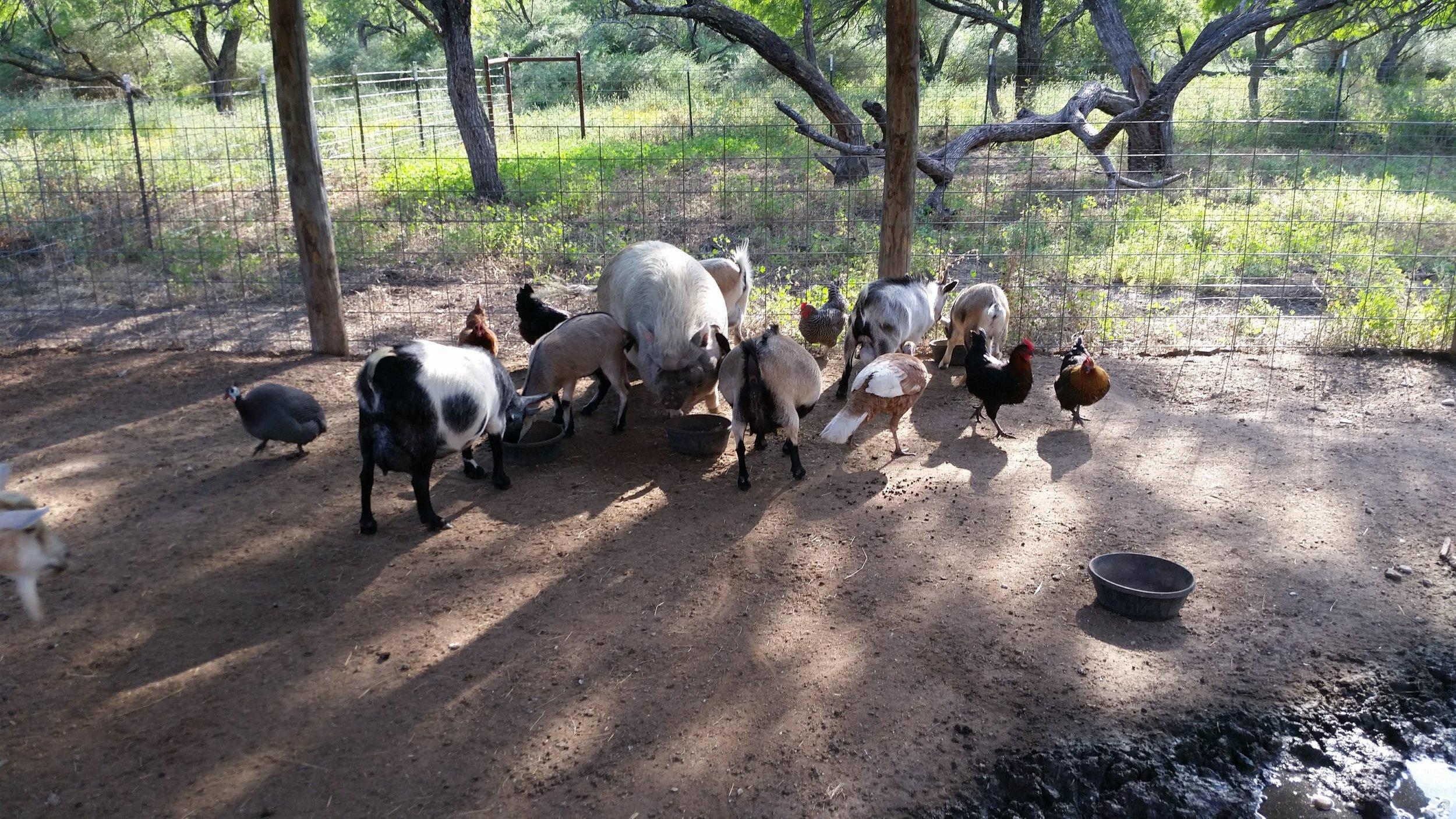 farm animals.jpg