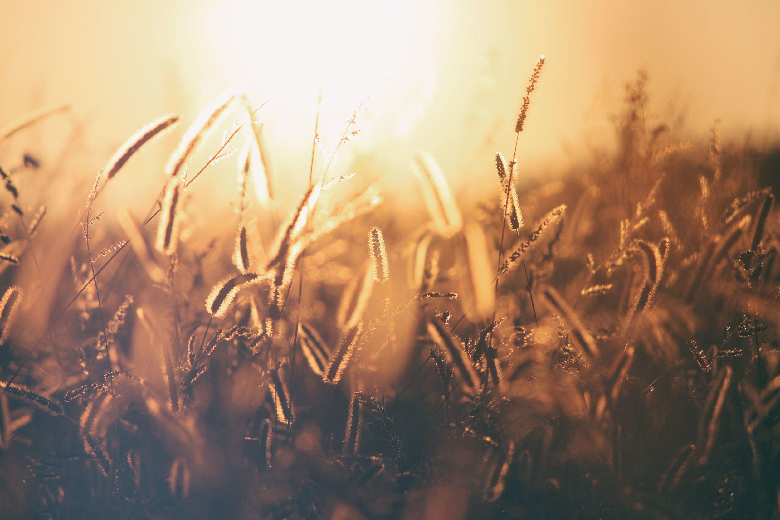 Fertilizer Use & Rules - byIndiana State Chemist & Seed Commissioner