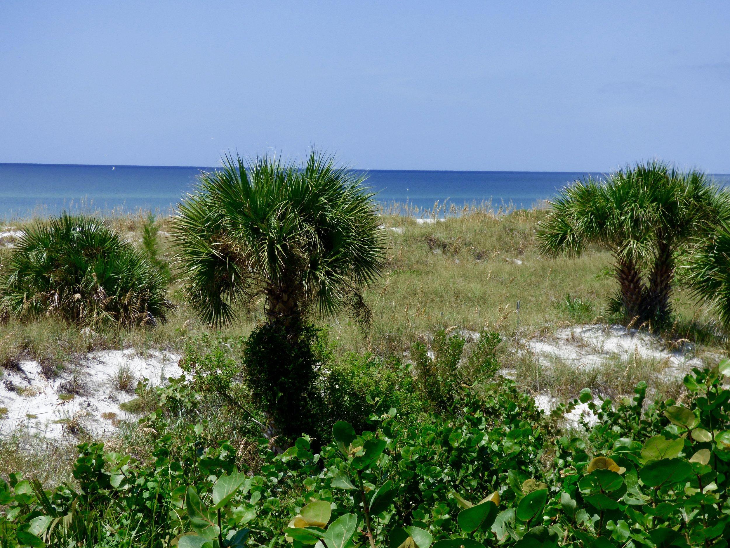 dunes.jpg