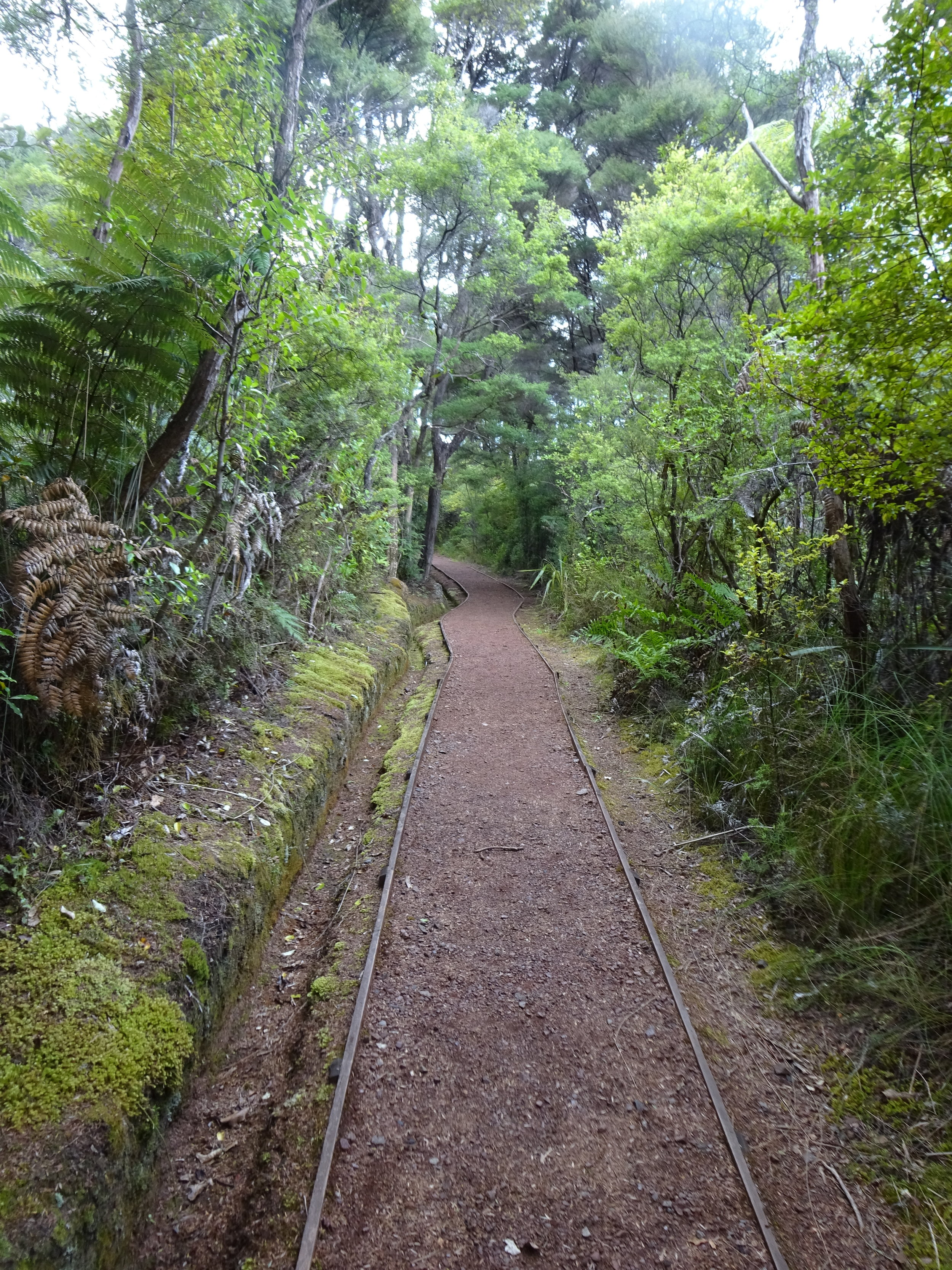 The Trail, Aotea Track, Great Barrier Island, New Zealand