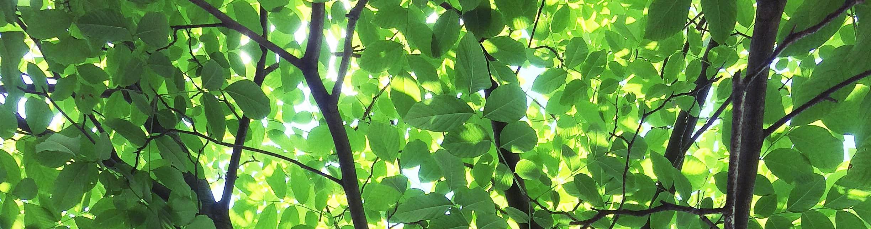 yellowwood-philly.jpg