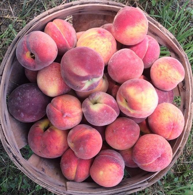 peach-basket