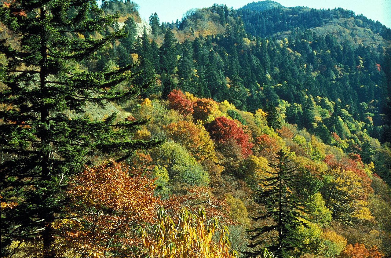 The southern Appalachian spruce-fir forest is a unique and endangered biome. We hope to replicate it on a small scale at our farm, using a permaculture approach to Christmas tree farming, and help move its species northward to avoid extirpation from climate change.