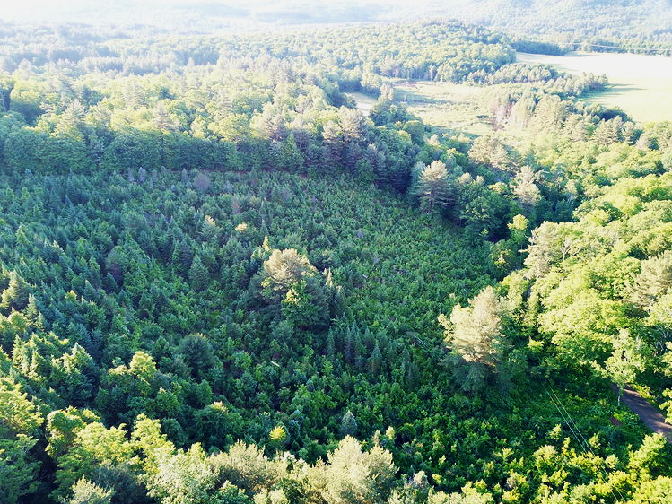The stump culture balsam groves comprise a complex managed forest landscape that defy mechanization, or even straight rows.  Photo source .