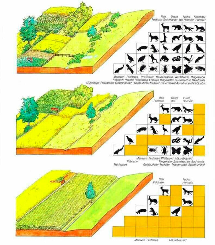 Diverse, well-integrated farms like coltura promiscua support significantly more native biodiversity than modern monocultures. Source: BUNDESAMT, F. U., & LANDSCHAFT, W. U. (1997). Umwelt in der Schweiz 1997. Berna, Buwal.