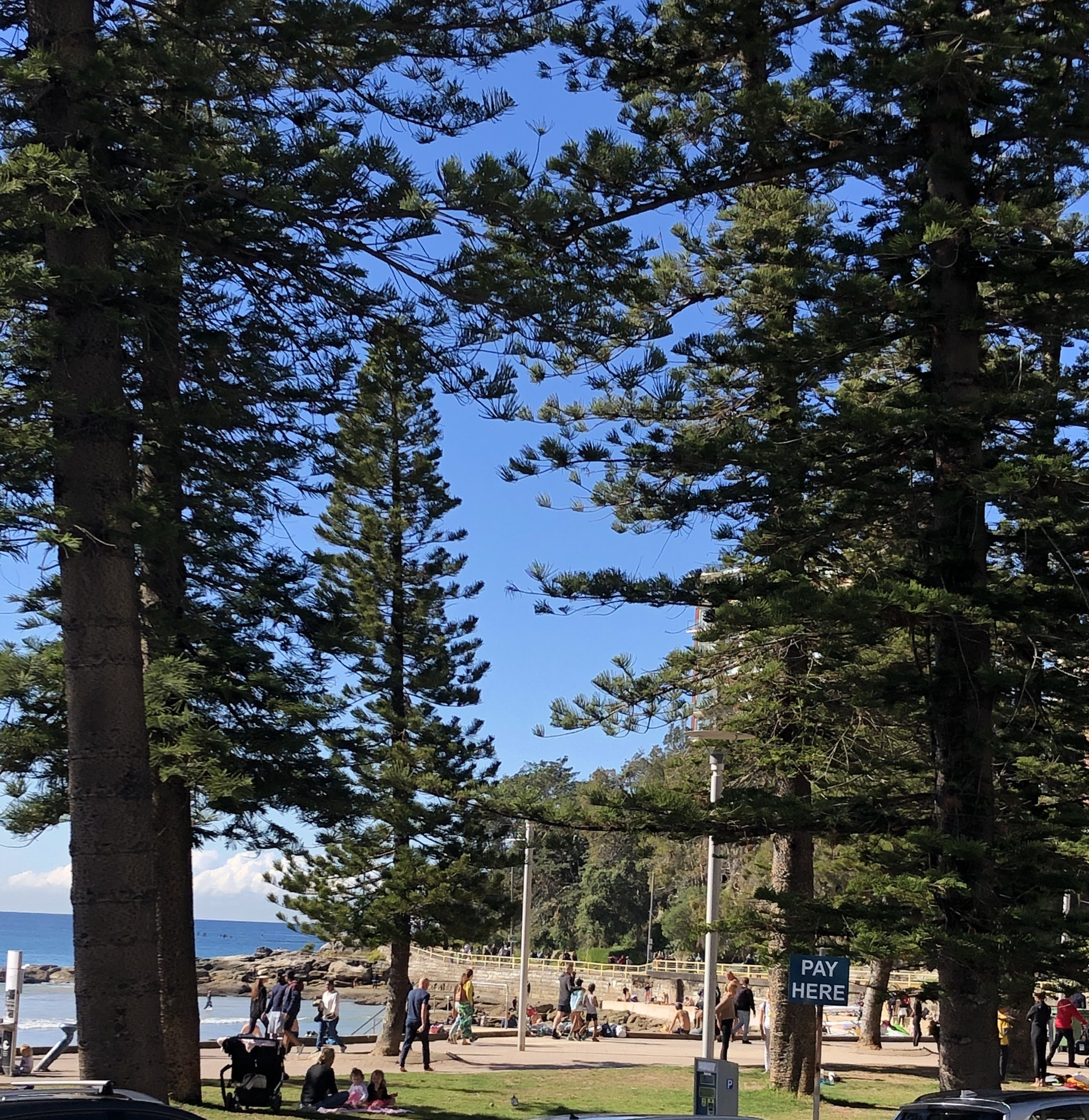 Manly beach yesterday…so many people out and about walking and swimming.