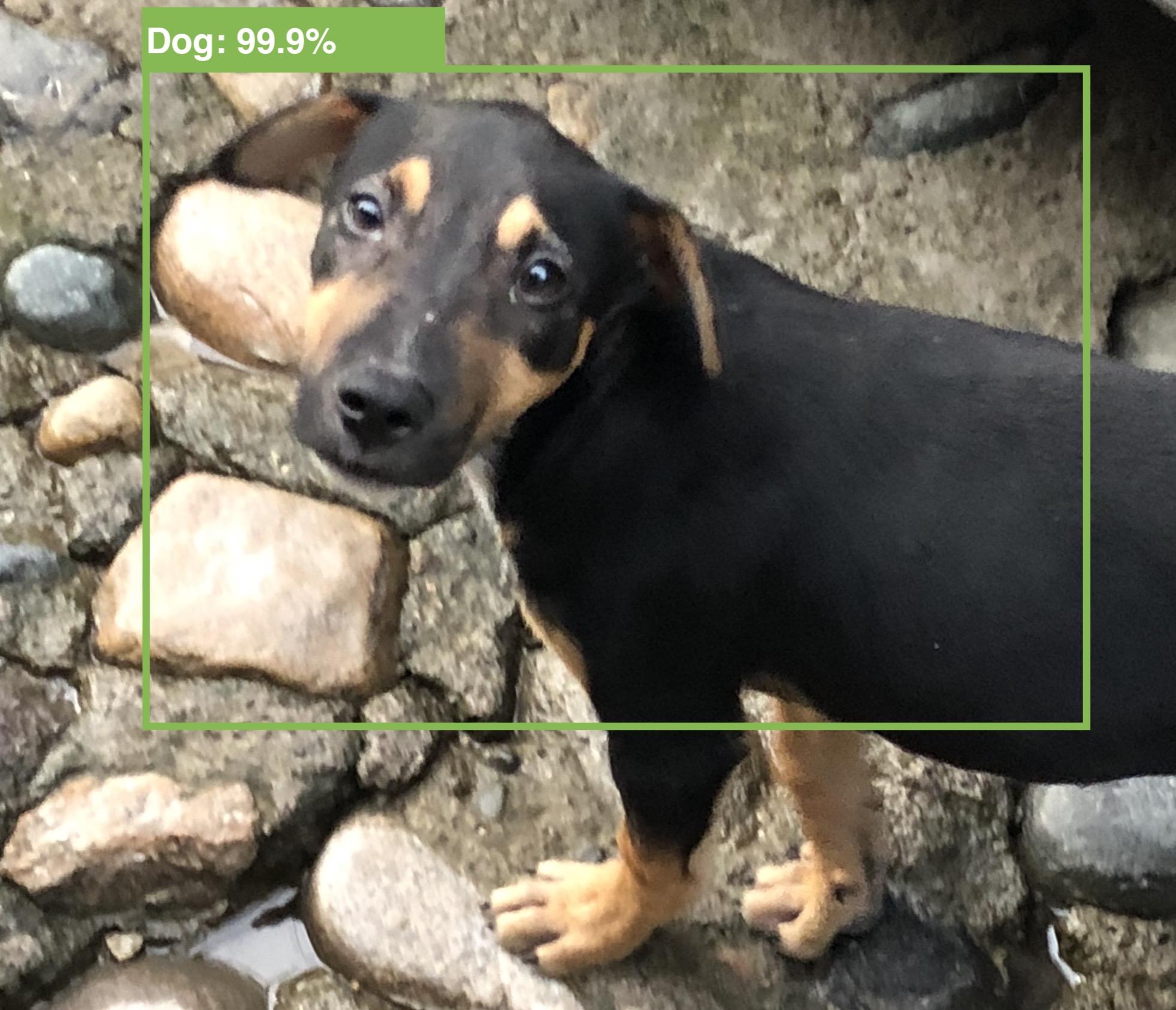 VNAnimalDetectorDog knows this is a good doggo