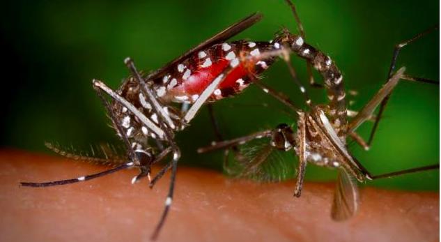 Pornhub helps combat Zika - The