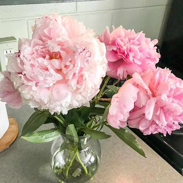 how beautiful are these peonies i got last week at the farmer's market??? 😍 i want all the fresh flowers all day everyday! what's your favorite flower? • • • • • • • • #thepineneedleco #peonies #florals #floralbouquet