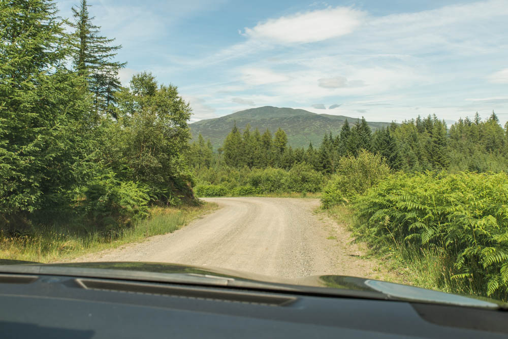 The view from your car on the drive