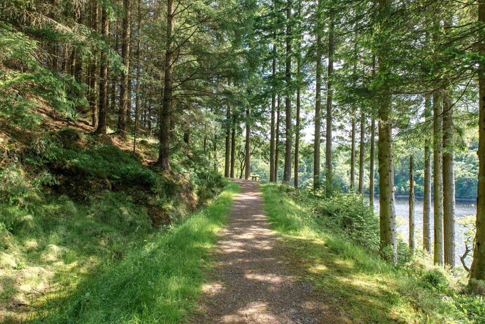 Loch Drunkie Trail