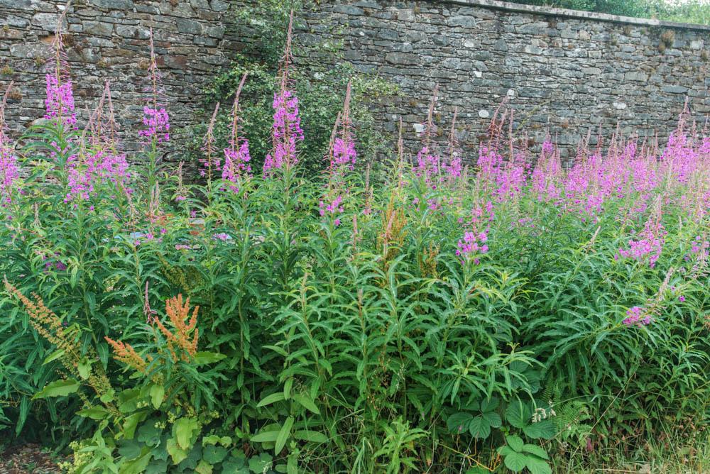 Glenfinnart-Walled-Garden-Ardentinny-Argyll-Forest-Park-2072.jpg