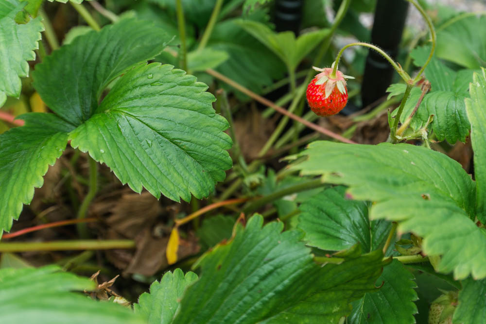 Glenfinnart-Walled-Garden-Ardentinny-Argyll-Forest-Park-2094.jpg