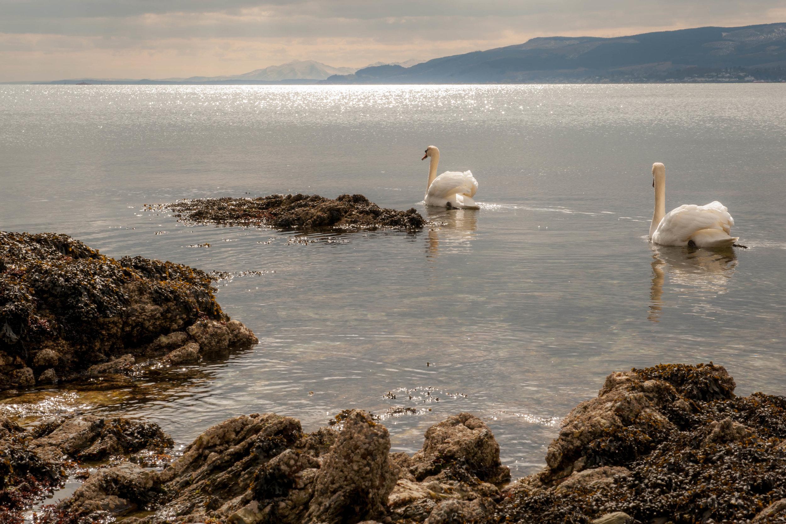 Cove, Clyde Sea Lochs