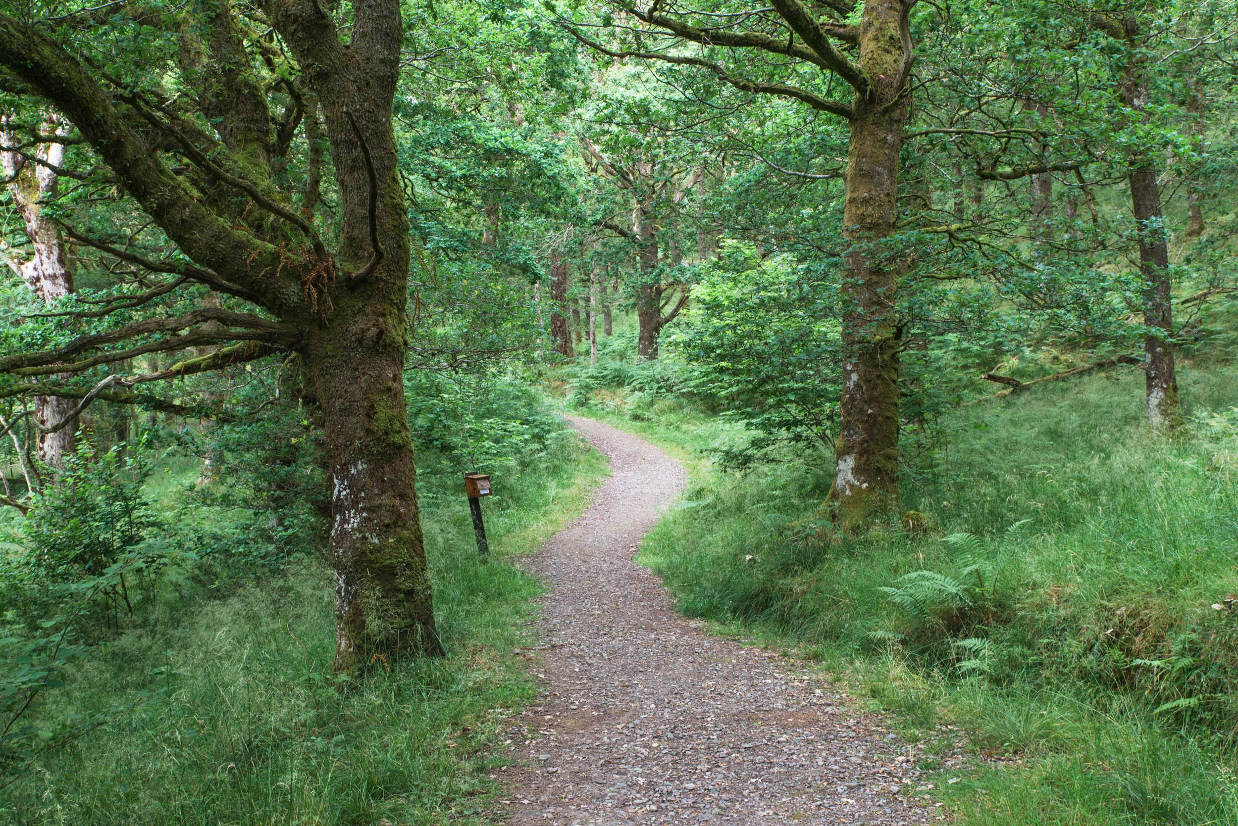Glen-Finglas-Play-Trail-6246.jpg
