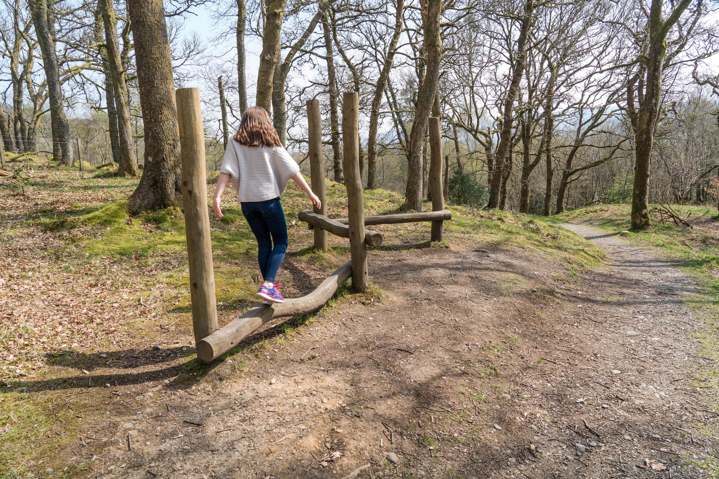 Twisty Log Trail