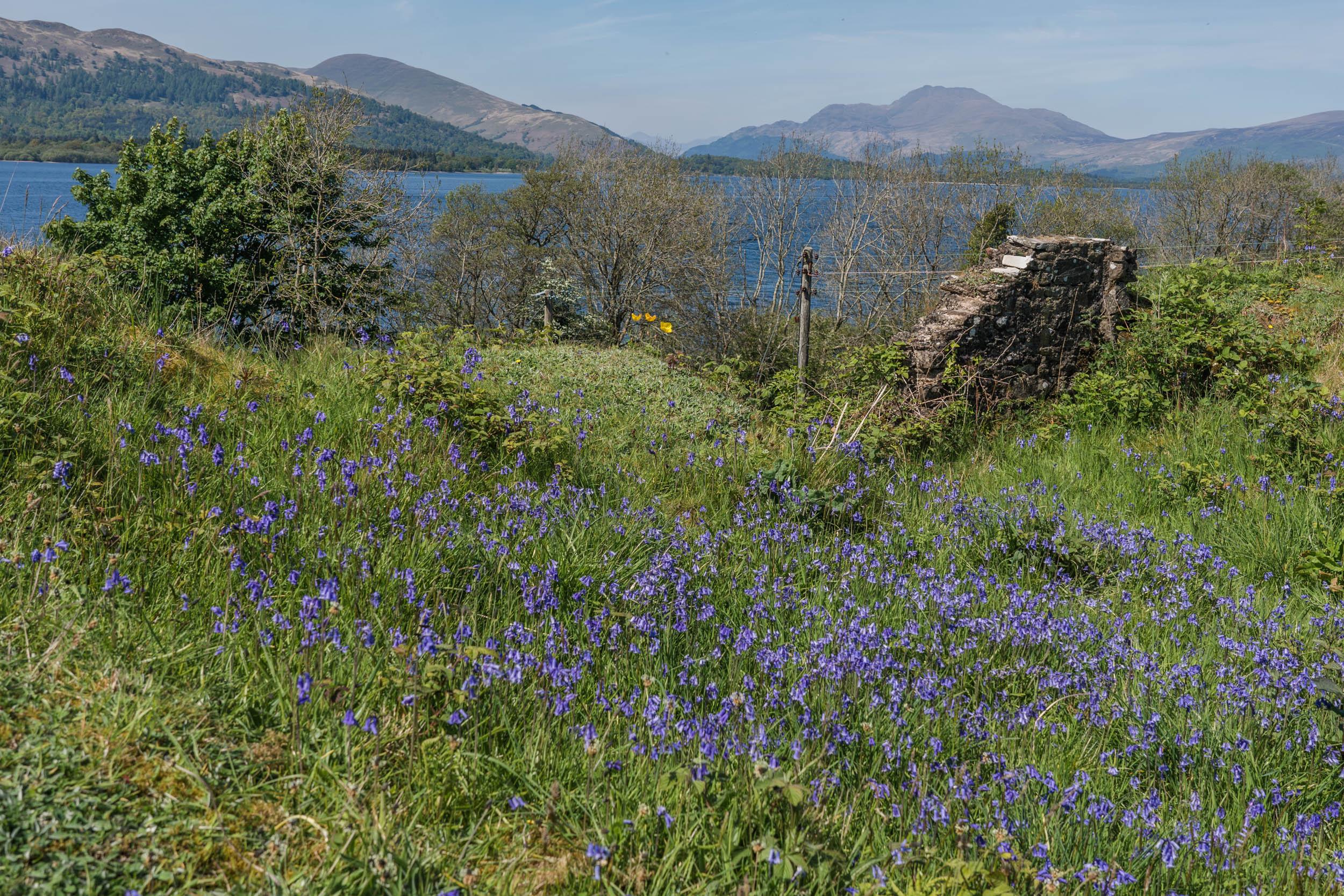 Inchmurrin Island, Loch Lomond