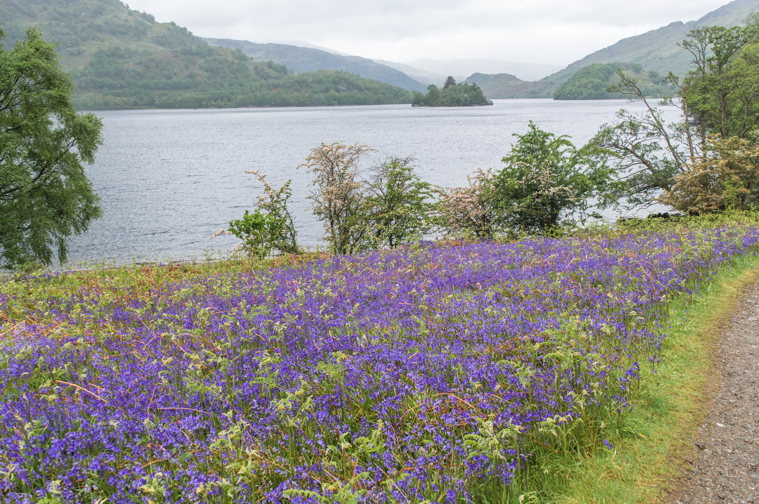 Eastern Shores of Loch Lomond
