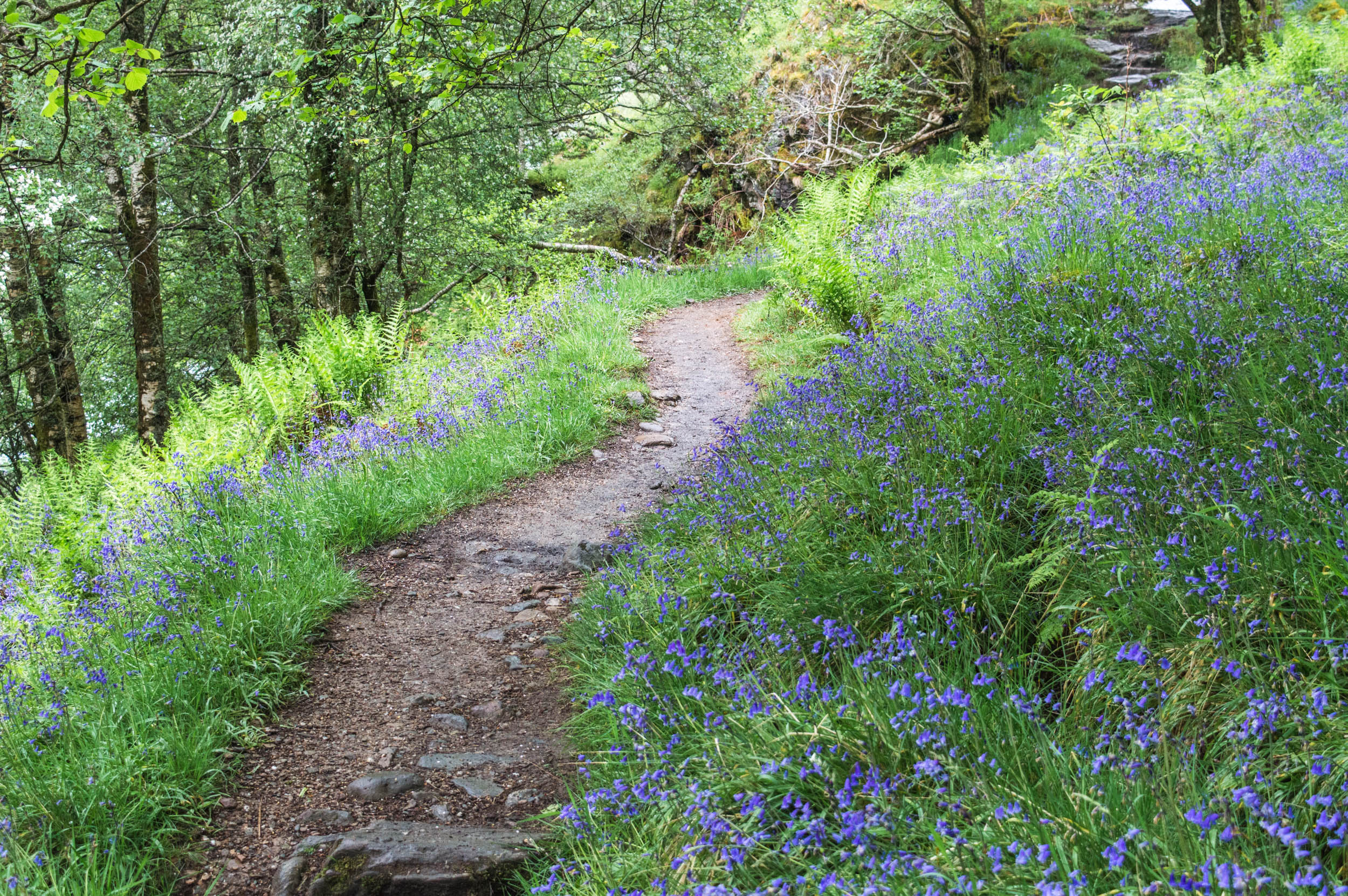 West Highland Way, Trossachs