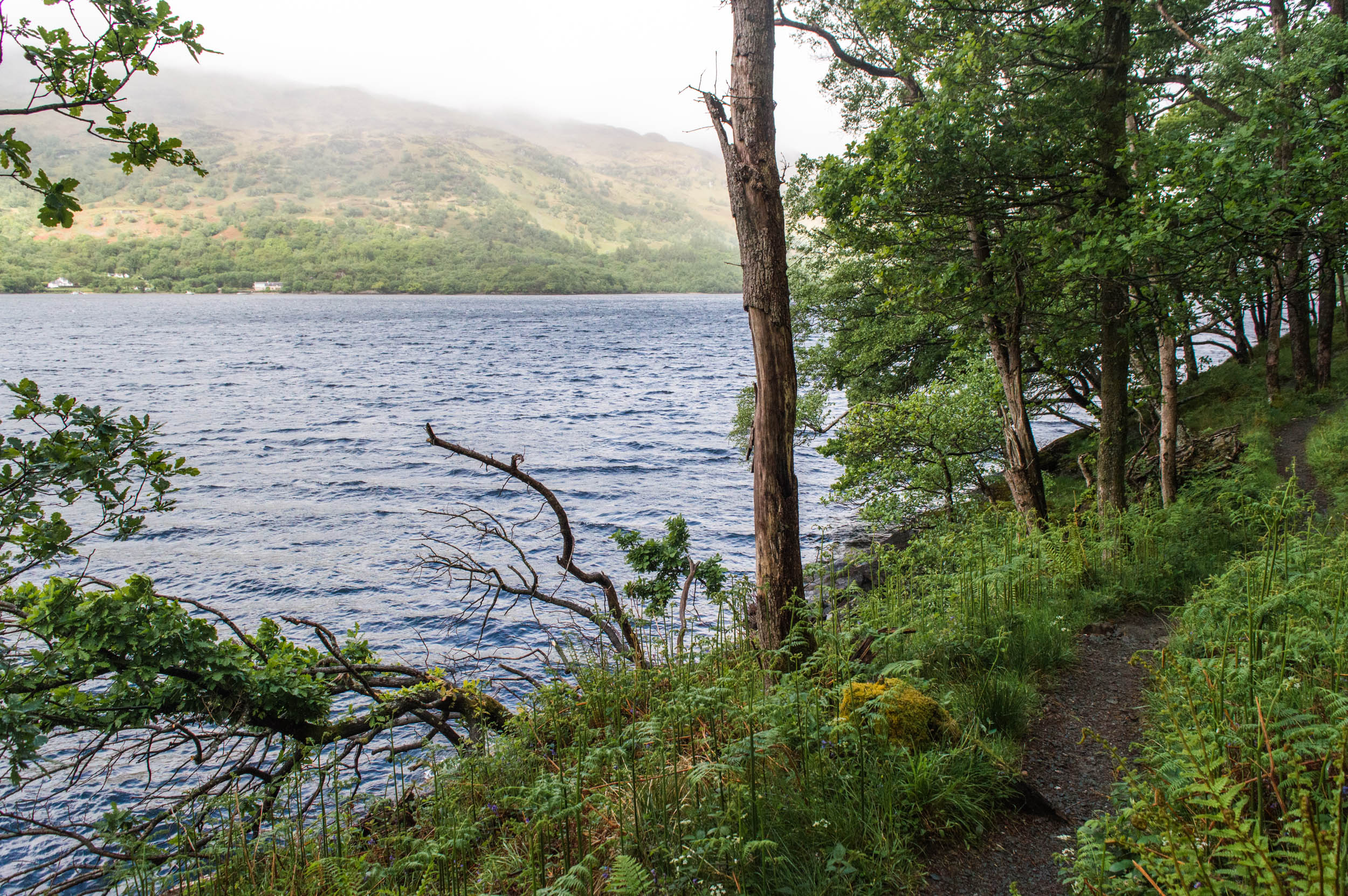 Rowardennan-West-Highland-Way-0044.jpg
