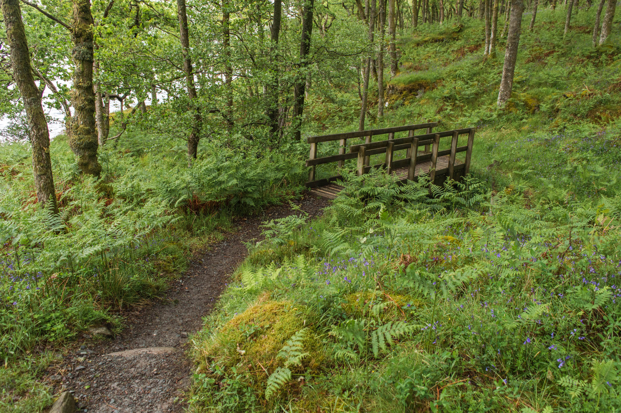 Rowardennan-West-Highland-Way-0048.jpg