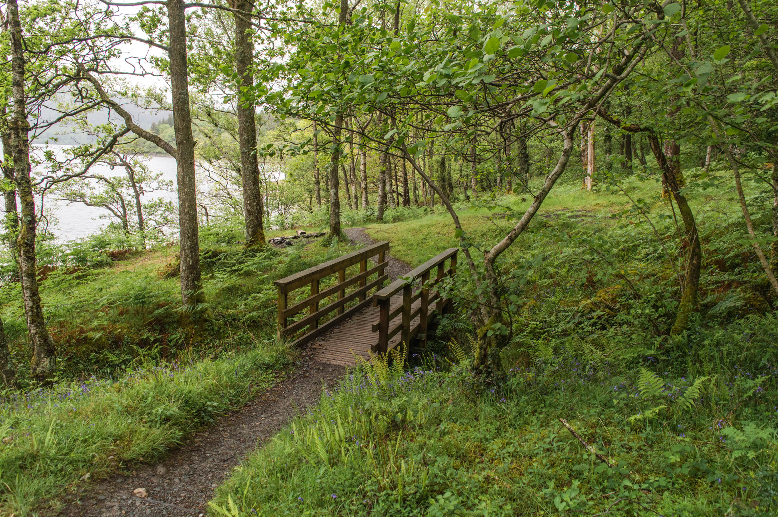Rowardennan-West-Highland-Way-0052.jpg