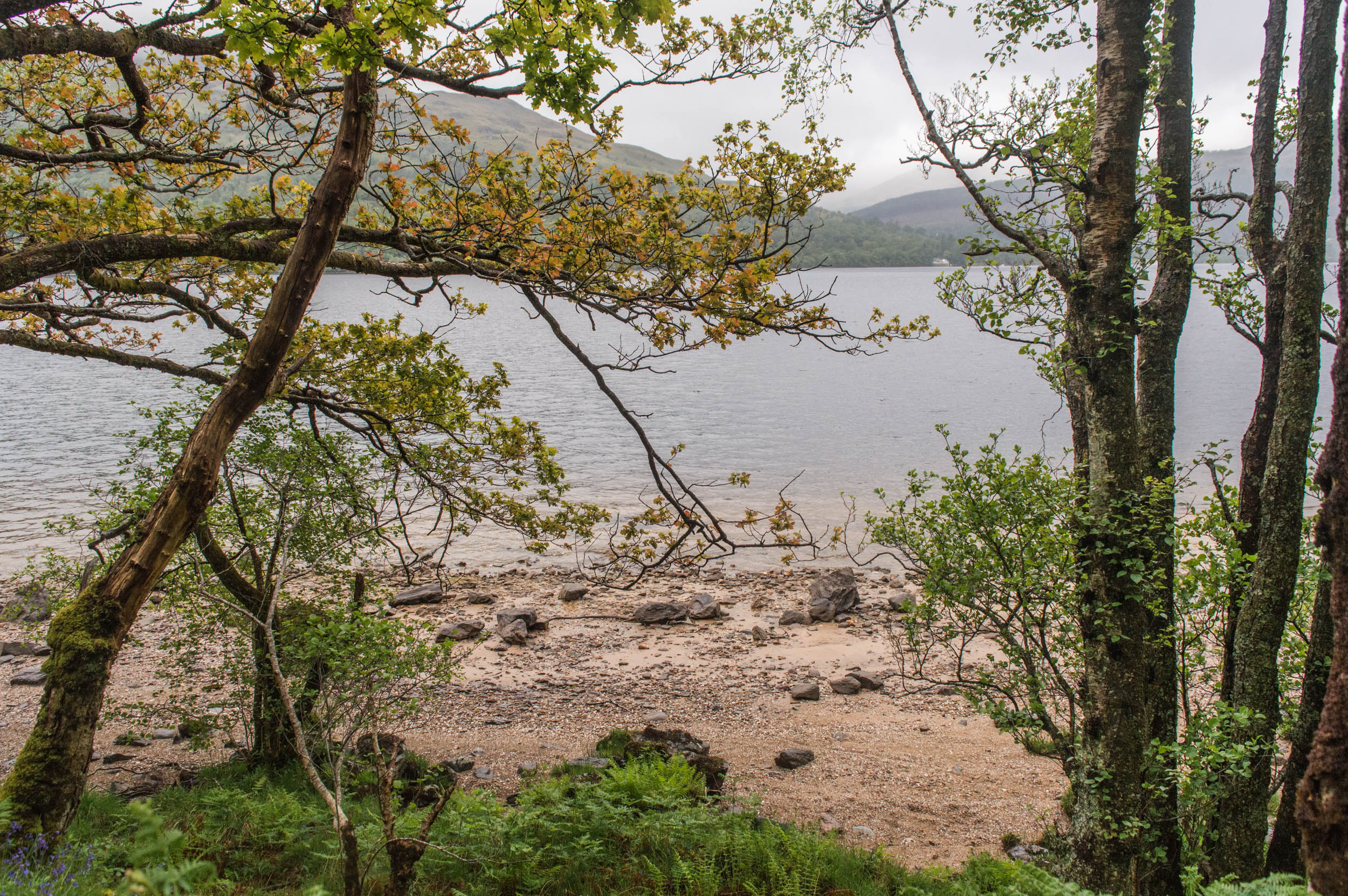 Rowardennan-West-Highland-Way-0053.jpg