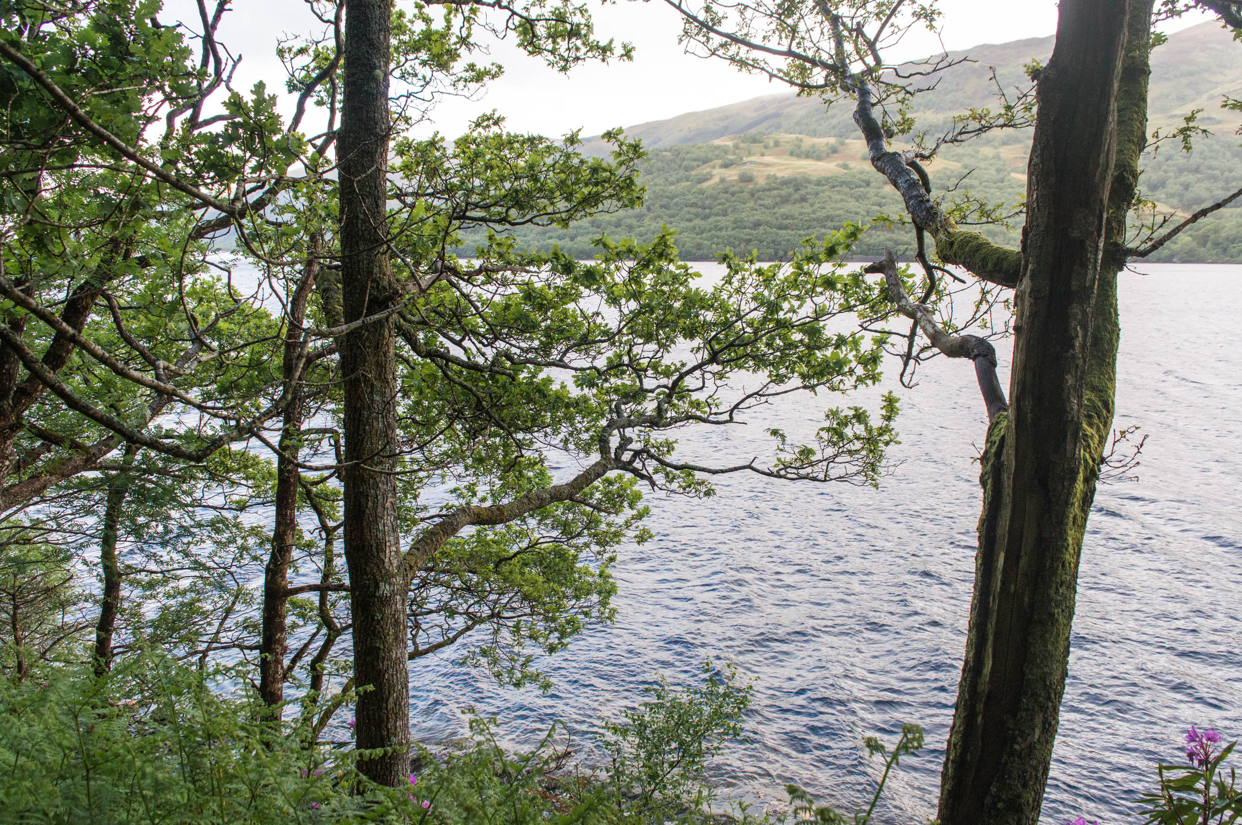 Rowardennan-West-Highland-Way-0029.jpg