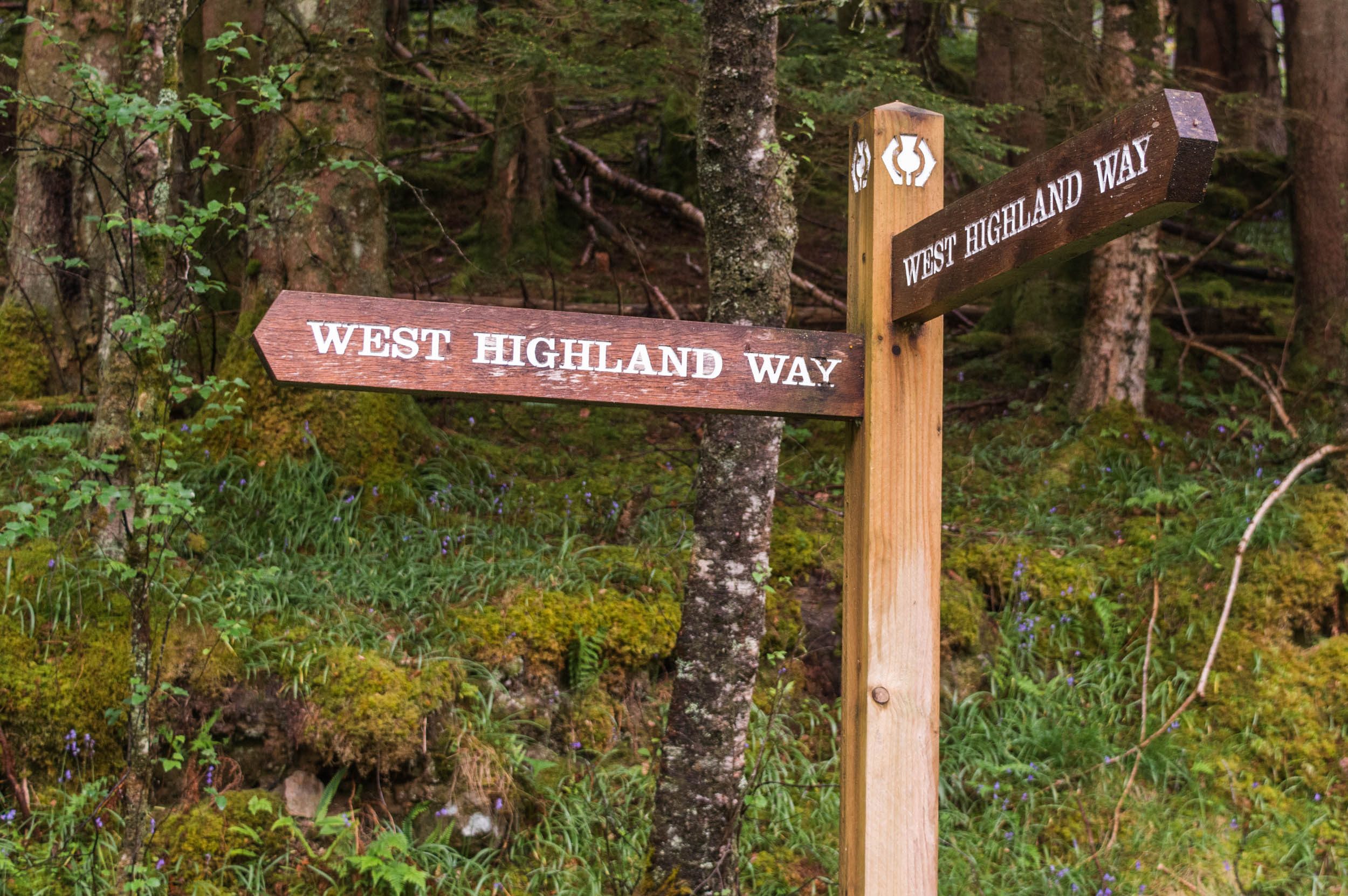 Rowardennan-West-Highland-Way-0079.jpg