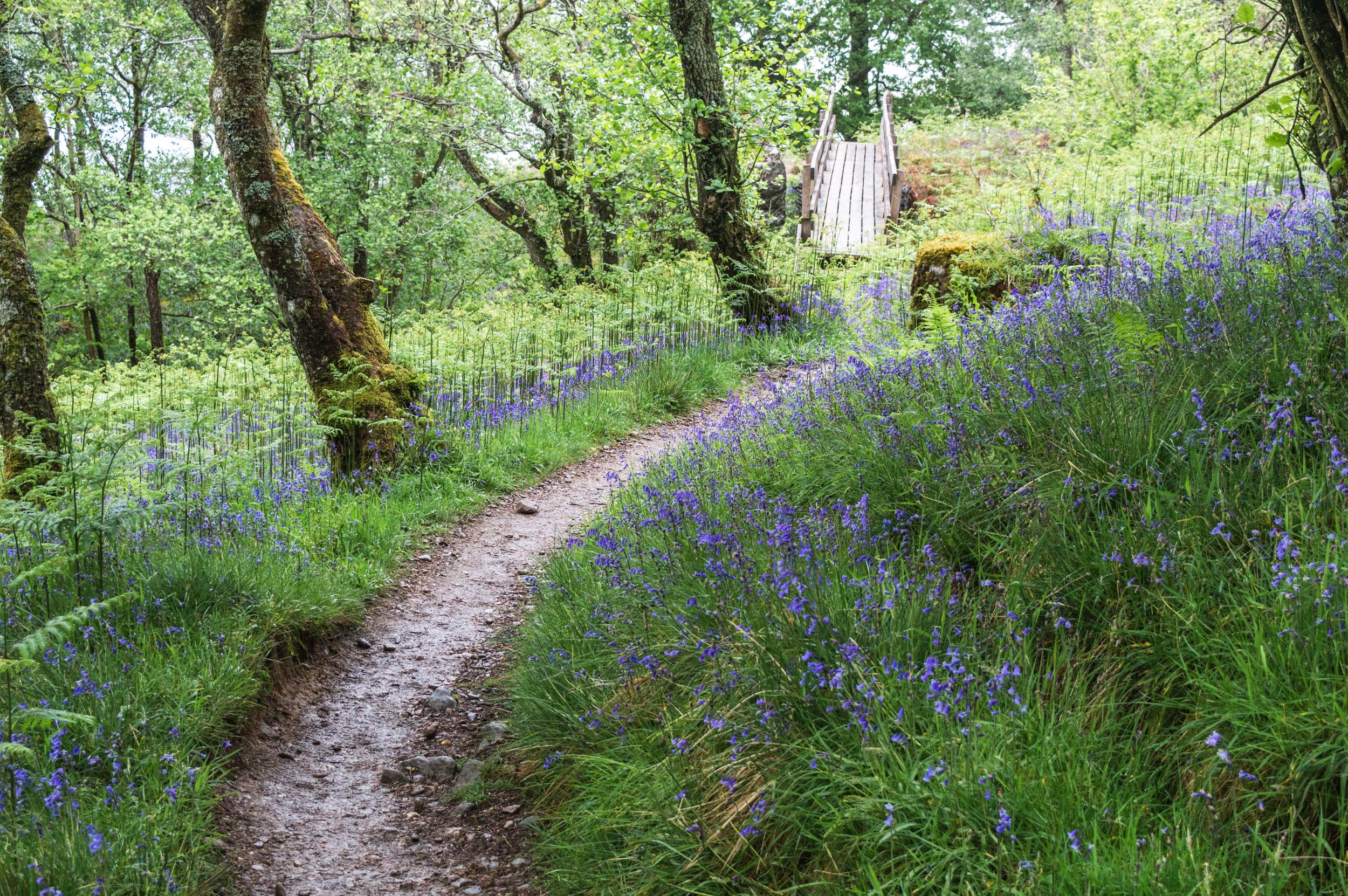 Woodlands-0183.jpg