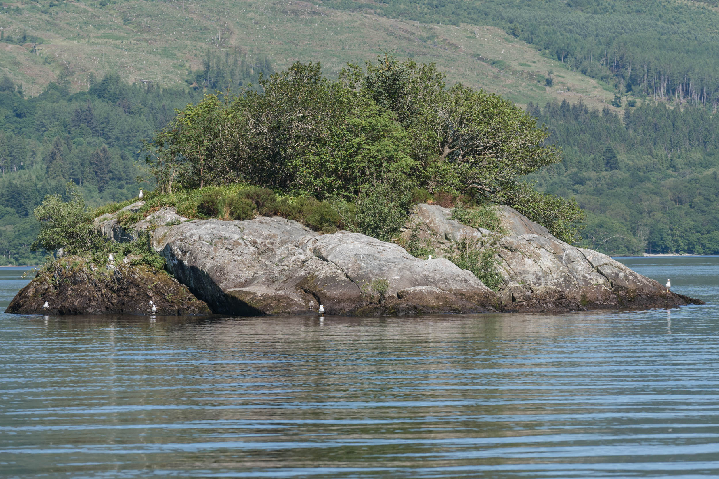 Ross Islands, Loch Lomond