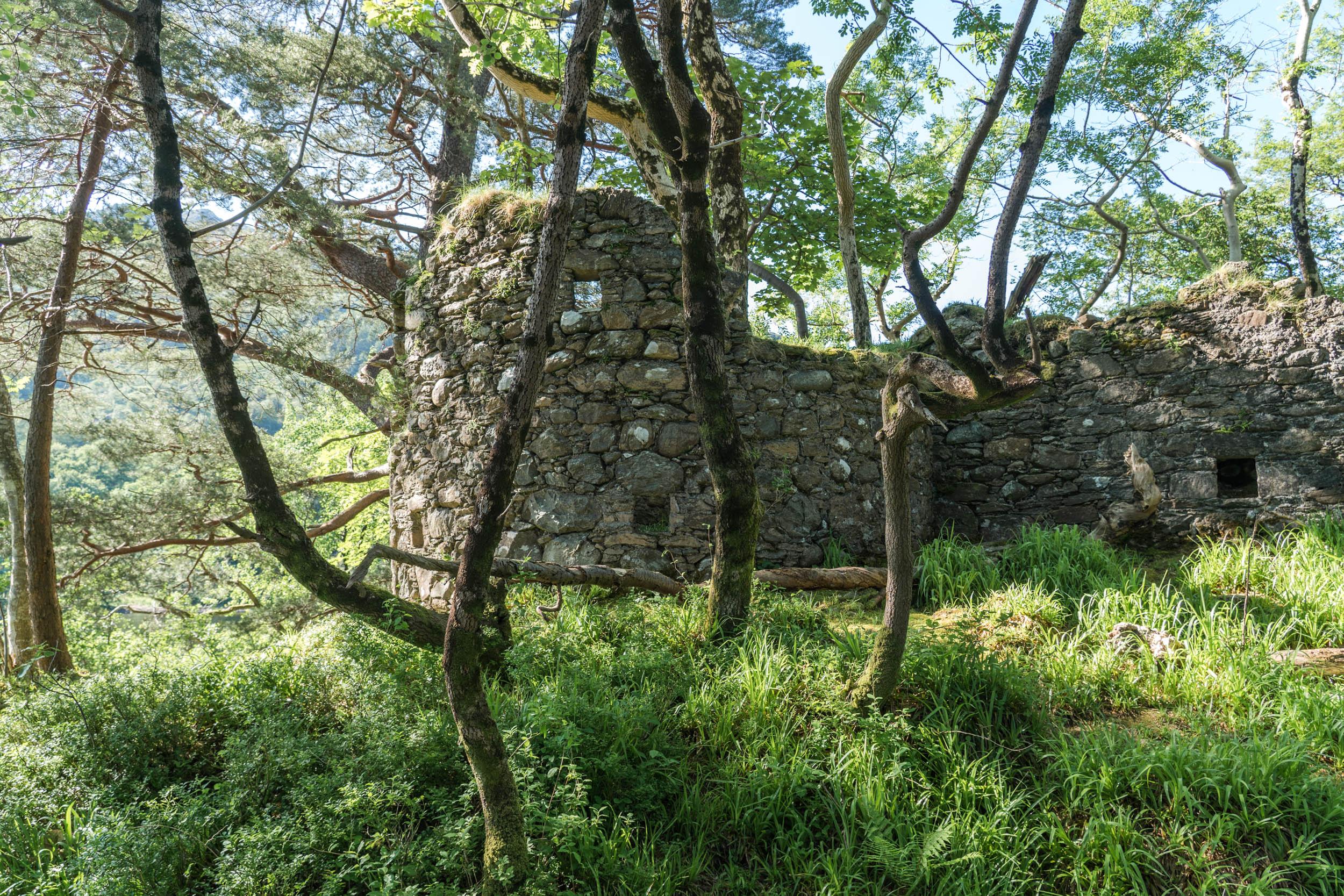 Inveruglas-Loch-Lomond-06871.jpg