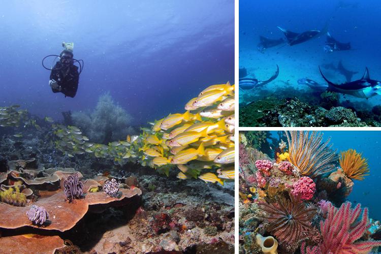TVOF-Blog-Flores-Diving3.jpg