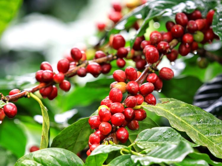 TVOF-Blog-Images-Coffee2.jpg