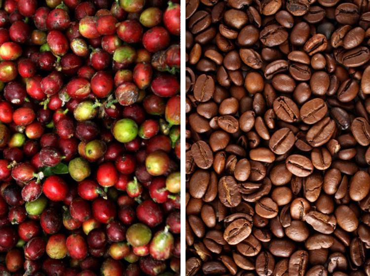 TVOF-Blog-Images-Coffee.jpg