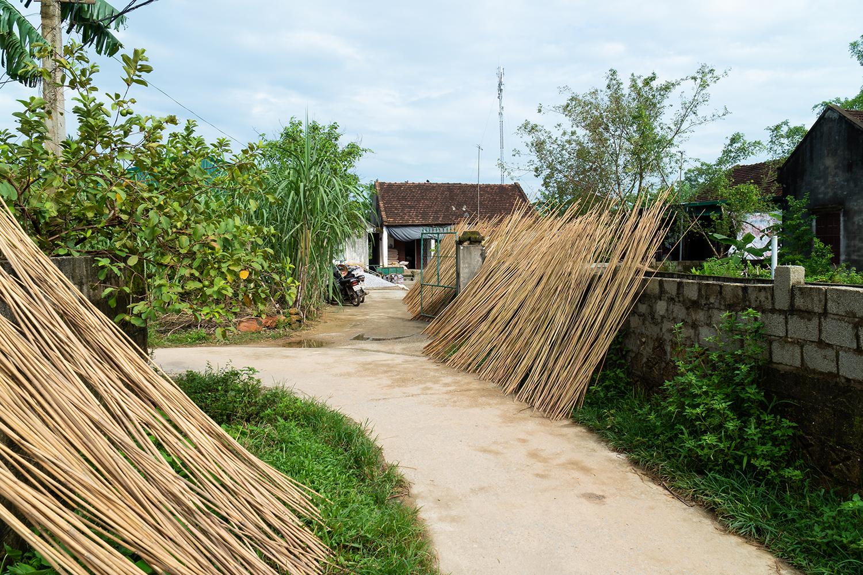 Jungle-Straws-Our-Farm-Sustainable-Alternative-To-Straws.jpg