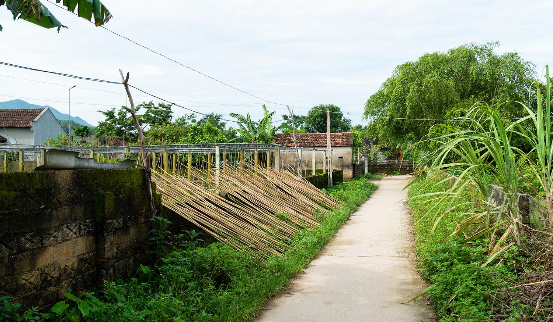 Bamboo-Drying-Outside-Jungle-Straws.jpg
