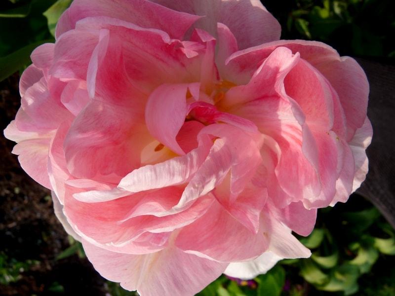 Tulip webs-min.jpg