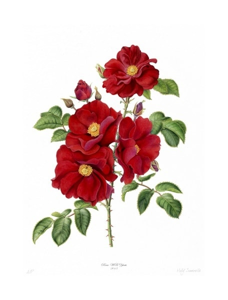 Rosa WB Yeats Holly painting-min.jpg