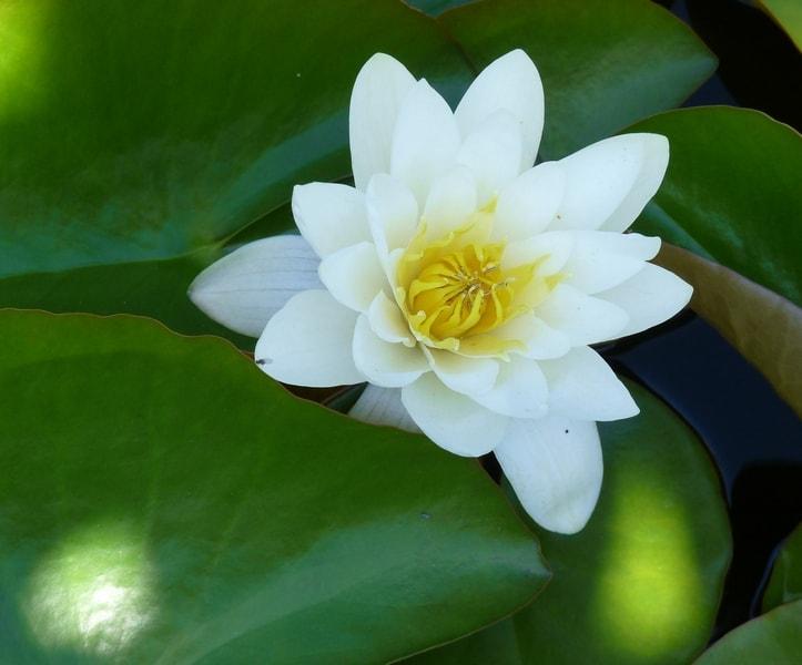 Water lily webs-min.jpg