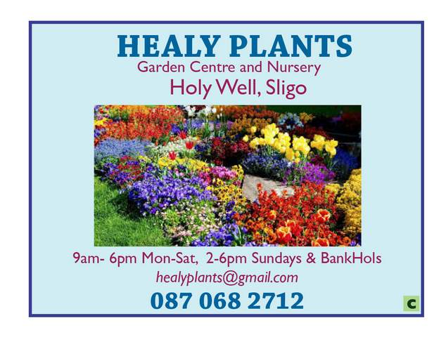 Healy Plants,Holy Well Sligo -
